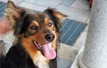 Brenin e l'intelligenza dei cani