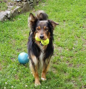 Brenin che gioca con le palline