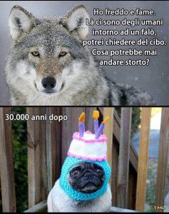 Da lupo a cane: adattamento della specie
